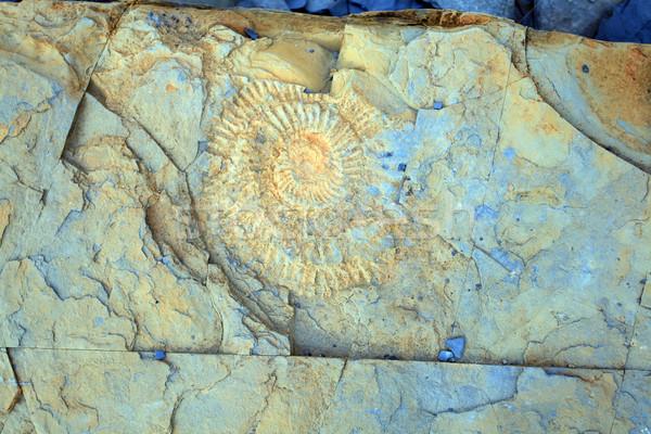 Ammonite  Stock photo © ollietaylorphotograp