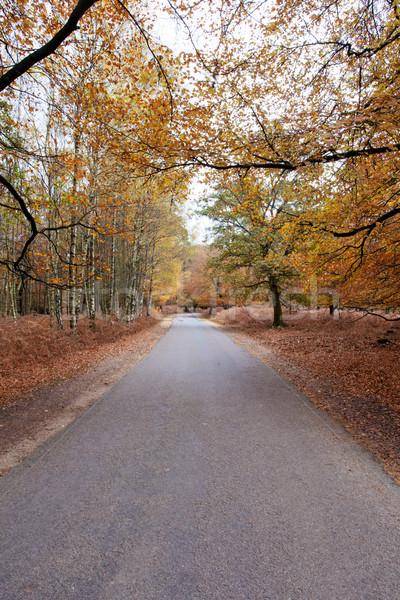 дороги лес новых осень юг Англии Сток-фото © ollietaylorphotograp
