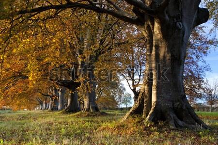 Sonbahar renkler ağaçlar yol gökyüzü çim Stok fotoğraf © ollietaylorphotograp