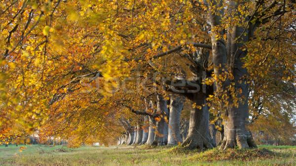 Autumn Colours Stock photo © ollietaylorphotograp