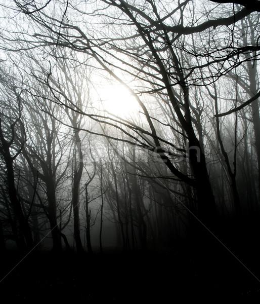 Fog Stock photo © ollietaylorphotograp