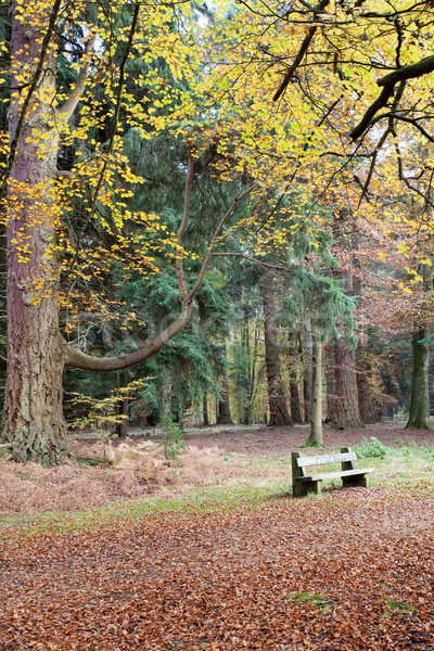 Assis automne banc nouvelle Photo stock © ollietaylorphotograp