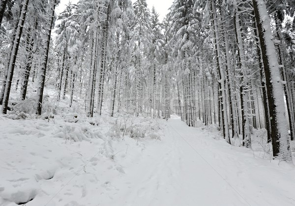 Winter forest road Stock photo © ondrej83