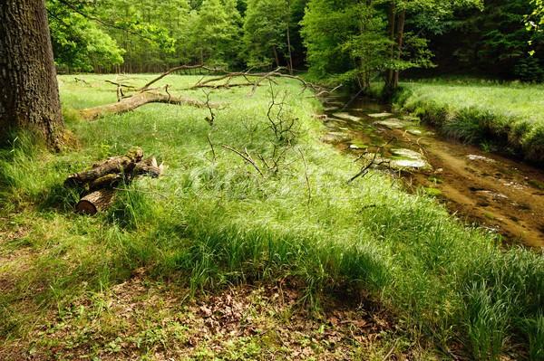 Piękna czyste rzeki lesie skał Zdjęcia stock © ondrej83