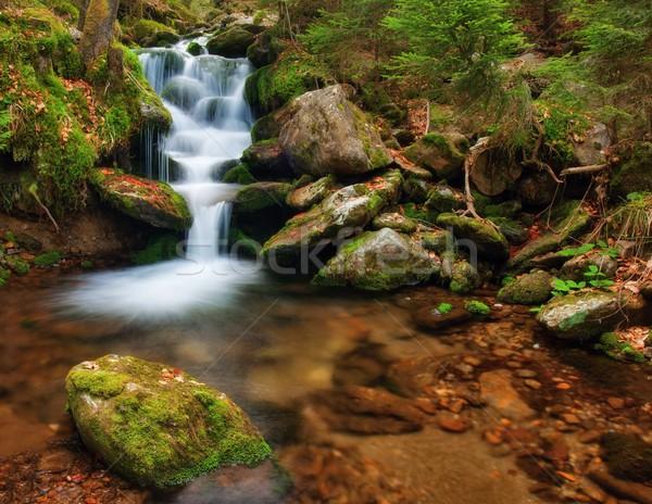 Primavera enseada canal musgo árvore Foto stock © ondrej83