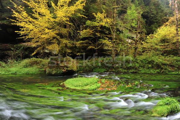 Jesienią kolory rzeki kolorowy drzew pozostawia Zdjęcia stock © ondrej83