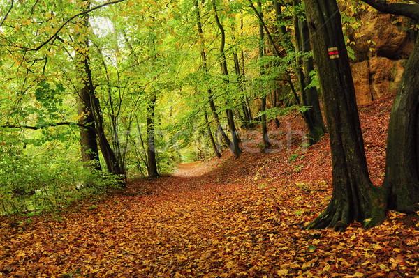 Colorato autunno bella colorato foglie buio Foto d'archivio © ondrej83