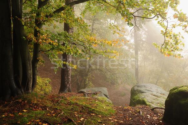 Autunno foresta nebbia bella colore mattina Foto d'archivio © ondrej83