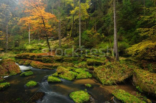Сток-фото: осень · цветами · реке · деревья · листьев