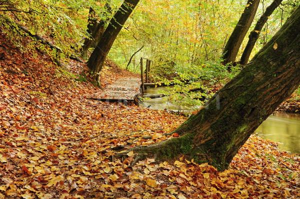 Kolorowy jesienią piękna kolorowy pozostawia ciemne Zdjęcia stock © ondrej83