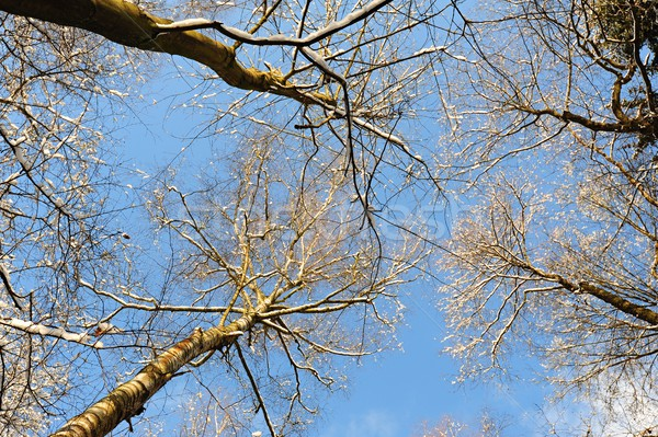 Abstract view of the treetops Stock photo © ondrej83