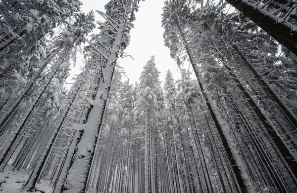 Hiver forêt neige gel décembre Photo stock © ondrej83