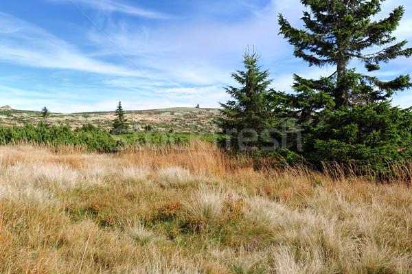 Vue paysage ciel arbre nature fond Photo stock © ondrej83