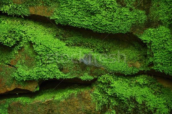 Mossy stones Stock photo © ondrej83