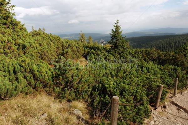 каменные горные пейзаж соснового облачный небе Сток-фото © ondrej83