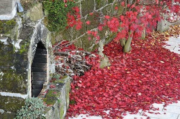 осень саду старые камин покрытый дерево Сток-фото © ondrej83