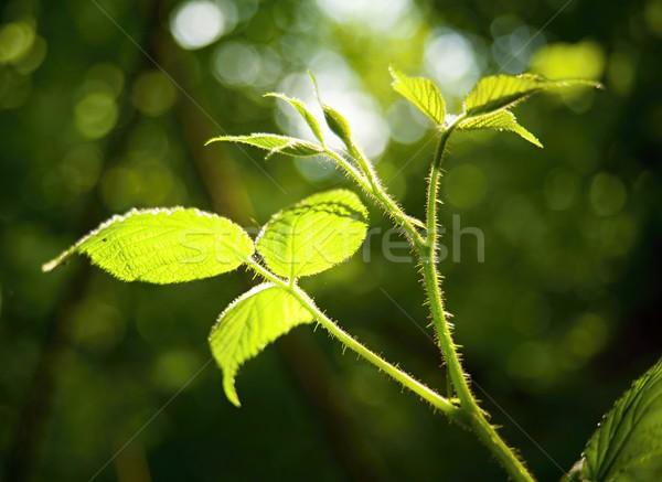 Green plant Stock photo © ondrej83