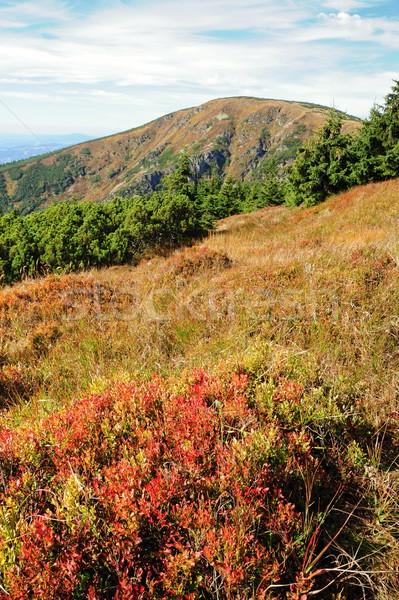 Landschap mooie kleurrijk najaar planten Stockfoto © ondrej83