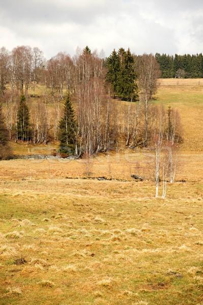 Tavasz tájkép legelő fák dombok égbolt Stock fotó © ondrej83