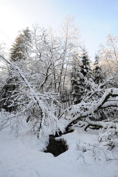 ストックフォト: 冬 · 風景 · 自由奔放な · スイス · 雪 · チェコ語