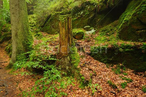 Orman sis kayalar orman yağmur buğu Stok fotoğraf © ondrej83