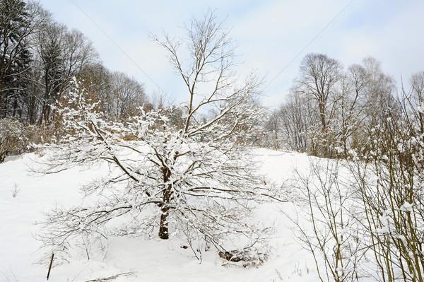 冬 風景 自由奔放な スイス 雪 チェコ語 ストックフォト © ondrej83