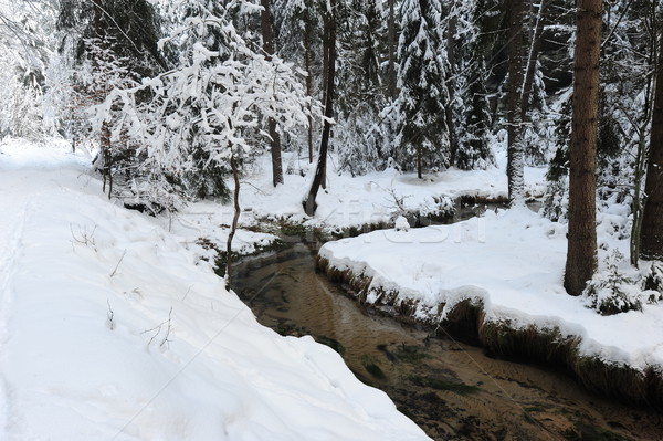 Winter landscape of Bohemian Switzerland Stock photo © ondrej83