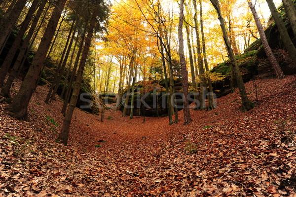 Automne route laisse misty forêt Photo stock © ondrej83