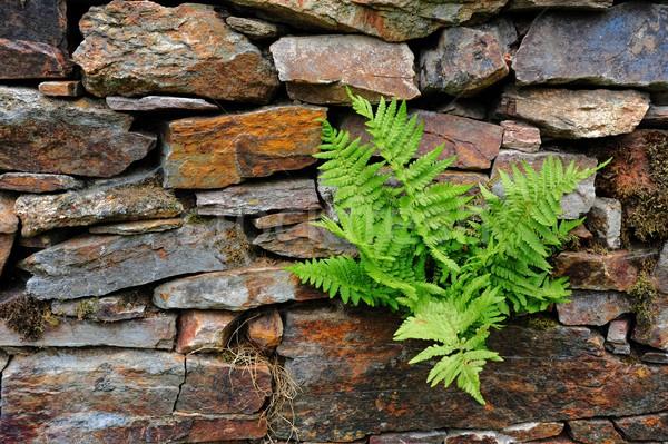Varen stenen voorjaar groene groeiend stenen muur Stockfoto © ondrej83