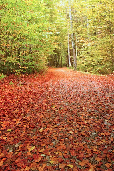 Autunno strada foglie misty foresta Foto d'archivio © ondrej83