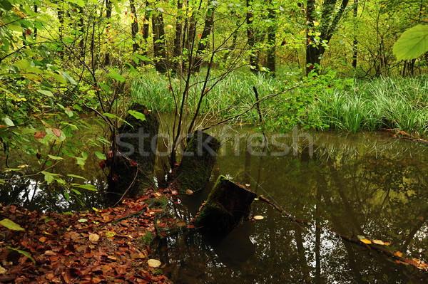 темно болото деревья глубокий лес воды Сток-фото © ondrej83
