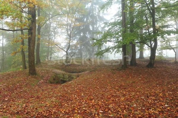 осень лес тумана красивой цвета утра Сток-фото © ondrej83