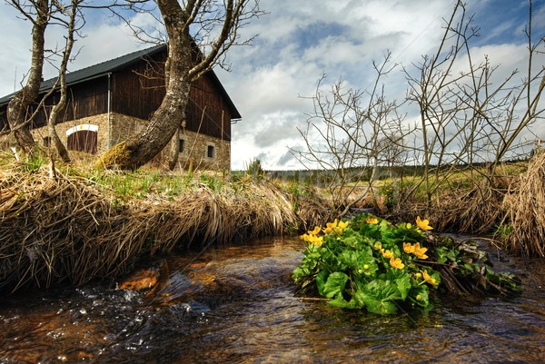 Spring creek with buttercups Stock photo © ondrej83