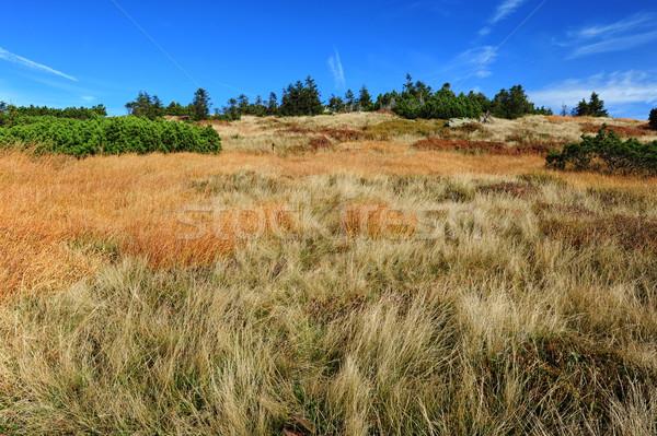 Coloré automne paysage belle bleu soft Photo stock © ondrej83