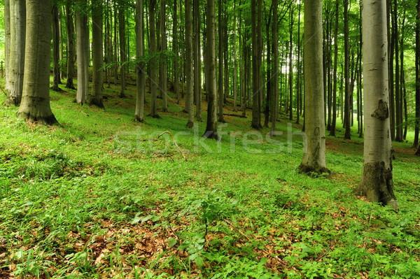 Belle printemps forêt arbres vert plantes Photo stock © ondrej83