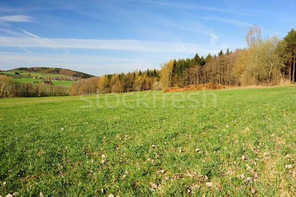 美しい 春 風景 森林 草原 青空 ストックフォト © ondrej83