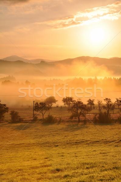 Autumn fog Stock photo © ondrej83