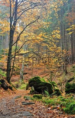 Jesienią lasu kolorowy objętych pozostawia sposób Zdjęcia stock © ondrej83