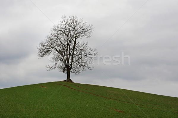 Arbre campagne vieux solitaire paysage Photo stock © ondrej83