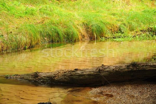 川 小 美しい 緑 谷 ストックフォト © ondrej83