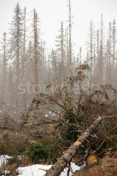 Hó hóvihar erdő erdő kezdet tavasz Stock fotó © ondrej83