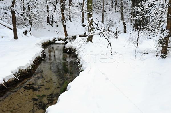 Invierno paisaje bohemio nieve checo árbol Foto stock © ondrej83