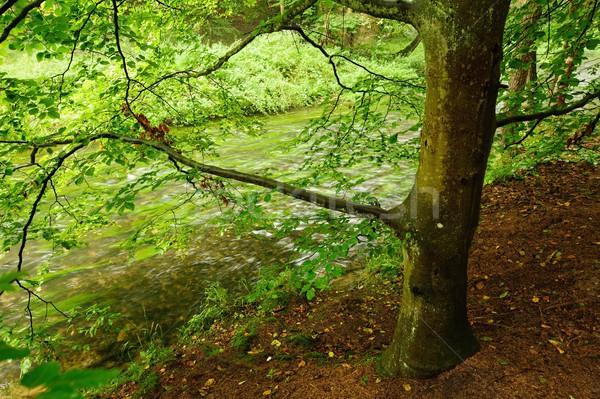 Fiume pioggia nebbia piccolo verde Foto d'archivio © ondrej83