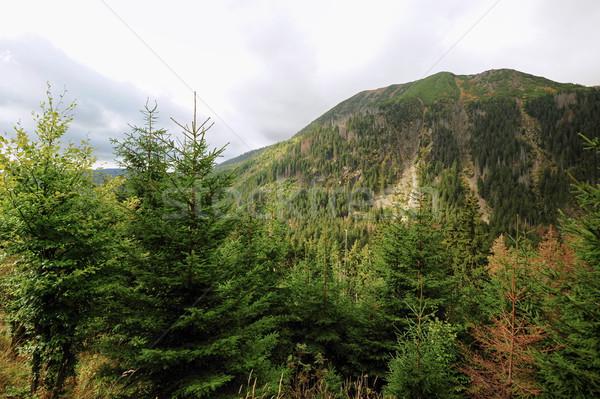 Widoku krajobraz niebo drzewo charakter tle Zdjęcia stock © ondrej83