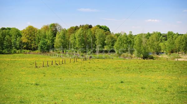 зеленый весны пейзаж красивой свежие полях Сток-фото © ondrej83