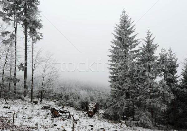зима лес снега мороз вечер декабрь Сток-фото © ondrej83