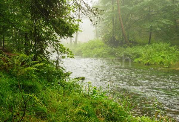 Rzeki deszcz przeciwmgielne mały zielone Zdjęcia stock © ondrej83