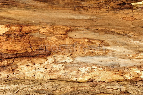 Wood with woodworm Stock photo © ondrej83