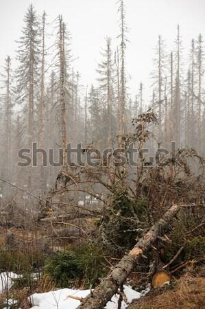 Neve nevasca floresta mata primavera Foto stock © ondrej83