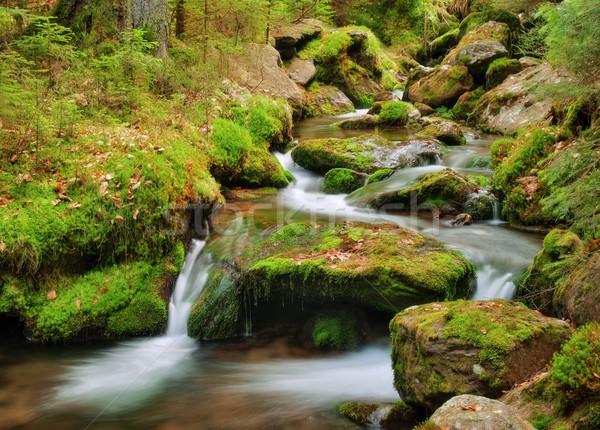 Tavasz patak folyik csatorna moha fa Stock fotó © ondrej83